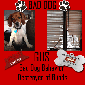 Bad Dog Photo Contest Gus