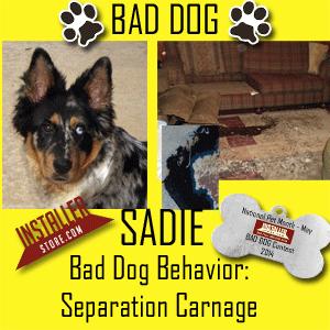 Installerstore Bad Dog Photo Contest