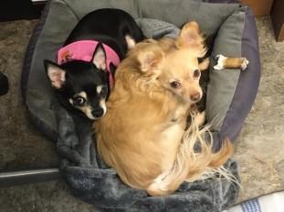 Minnie&Miles-1